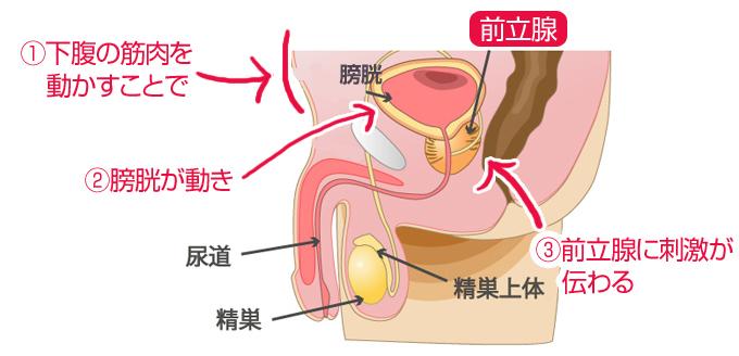 前立腺の快感を高めるための『アネロスを挿入しながらドローイン』