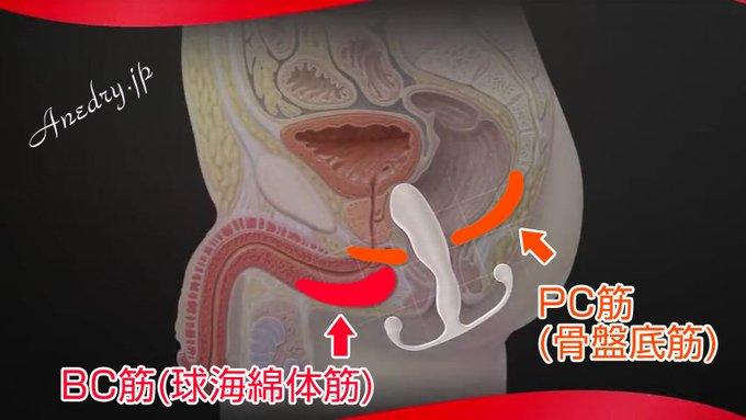 「PC筋(骨盤底筋)」と「BC筋(球海綿体筋)」の違いと、アネロス使用時の使い分けの話